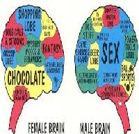 Brain Differences Between Men and Women
