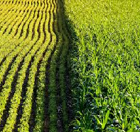 Genetically Modified Food and Environment