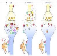 Mechanism on Long Term Depression LTD Induction