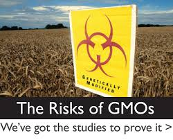 Environmental risks of genetically modified food