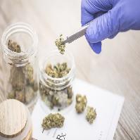 Pros and Cons of Legalizing Medicinal Marijuana