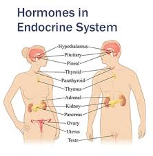 Diabetes and Drug Treatments and Endocrine System