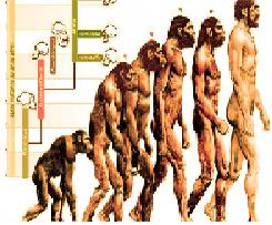 Evolution Theory or Human Evolution Theory