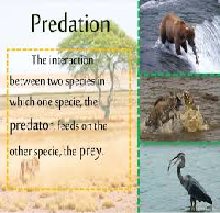 Predation and Relationship between two Different Species