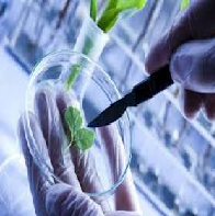 Biotechnology Final Paper Assignment