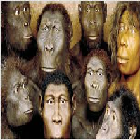 Compare and contrast Australopithecus