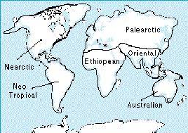 Continental Drift Influences Biogeography