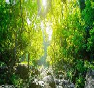 Environmental Law in Global Governance