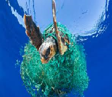 Great Pacific Garbage Patch and Oceanographers Concern