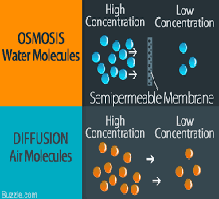 Osmosis and the Simple Diffusion