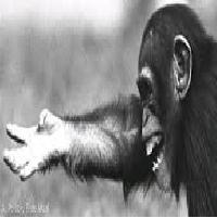 Primate Calls Human Language and Culture