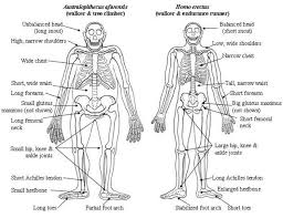 Compare and contrast Australopithecuswith Homo