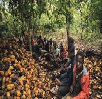 Child Labor in Ghana Understanding Human Behavior