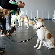 Animal training school