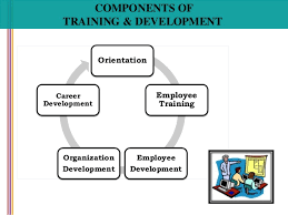 Components of training in human resources