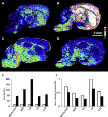Quantitative Molecular Imaging of Neurotransmitters