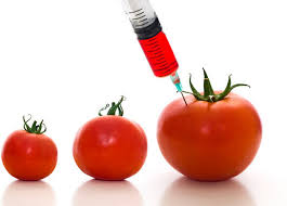 Genetic modified foods
