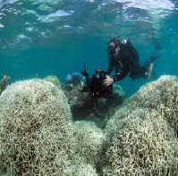 The Great Barrier Reef FDI Project