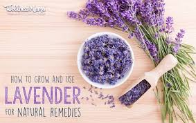 The Scent of Lavender Having an Effect on Mood